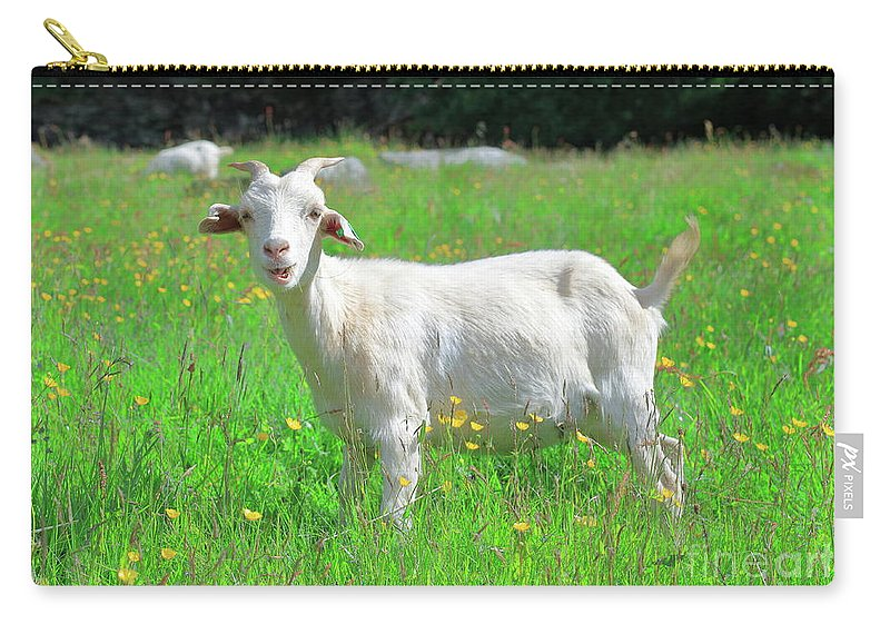 Goat Carry-all Pouch featuring the photograph Goat Portrait by Arild Lilleboe