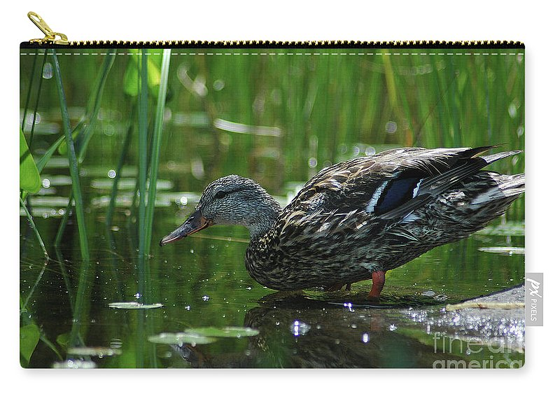 Water Carry-all Pouch featuring the photograph Going For A Swim by Steve Cost