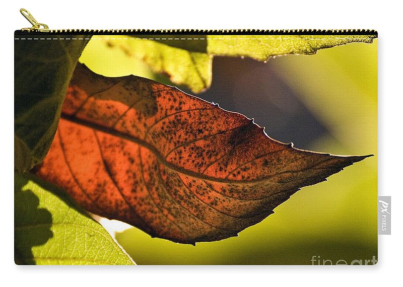 Trees Carry-all Pouch featuring the photograph Gold Leaf In Fall by Norman Andrus