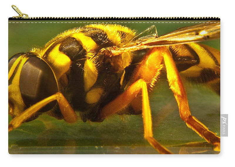 Syrphid Carry-all Pouch featuring the photograph Gold Syrphid Fly by Douglas Barnett
