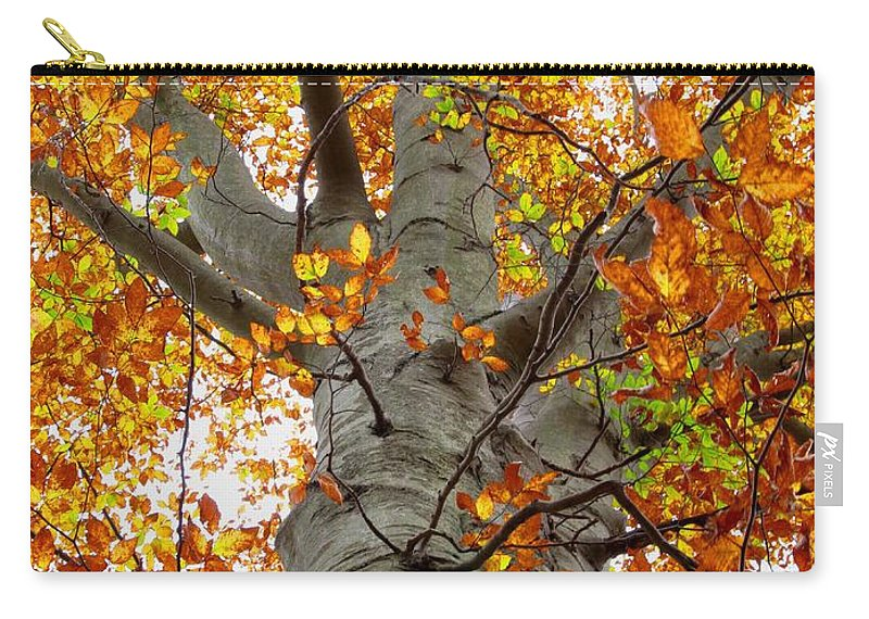 Golden Leaves Golden Trees Golden Beech Tree Images Autumn Flora Mature Beech Trees Oldgrowth Beech Trees Big Trees Big Beech Tree Images Fall Forest Color Yellow Trees Golden Tree Prints Indian Summer Prints Nature Prints Nature Photography Natural Design Green Interior Design Home Decor Office Decor Wall Art Outdoor Art Forest Art Woodland Art Treescape Arborscape Tree Landscape Photography Oldgrowth Forest Preservation Biodiversity Conservation Silviculture Forestry Decidious Forest Broadleaf Trees Hardwood Trees North American Seasonal Forest Prints Carry-all Pouch featuring the photograph Golden Beech by Joshua Bales