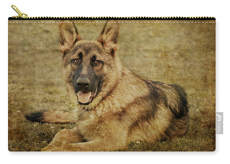 Dog Carry-all Pouch featuring the photograph Golden Boy by Sandy Keeton