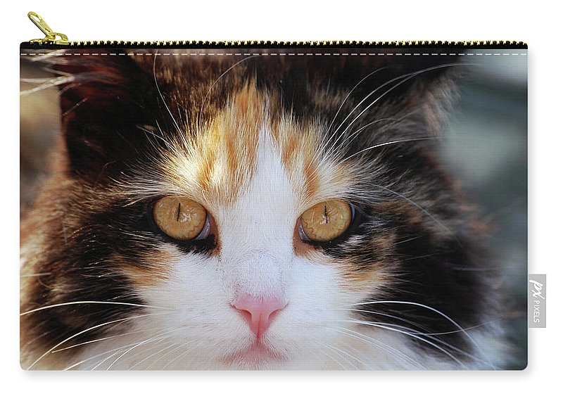 Cat Carry-all Pouch featuring the photograph Golden Eyes by Lori Tambakis