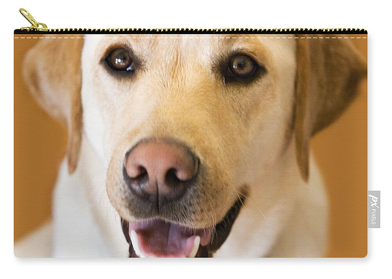 Lab Carry-all Pouch featuring the photograph Golden Lab by Marilyn Hunt