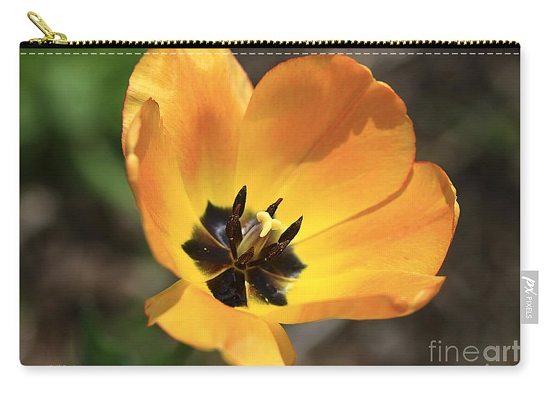 Tulip. Flower Carry-all Pouch featuring the photograph Golden Tulip Petals by Deborah Benoit