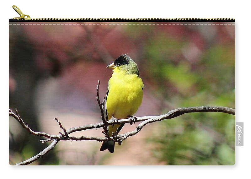 Bird Carry-all Pouch featuring the photograph Goldfinch 042914d by Edward Dobosh