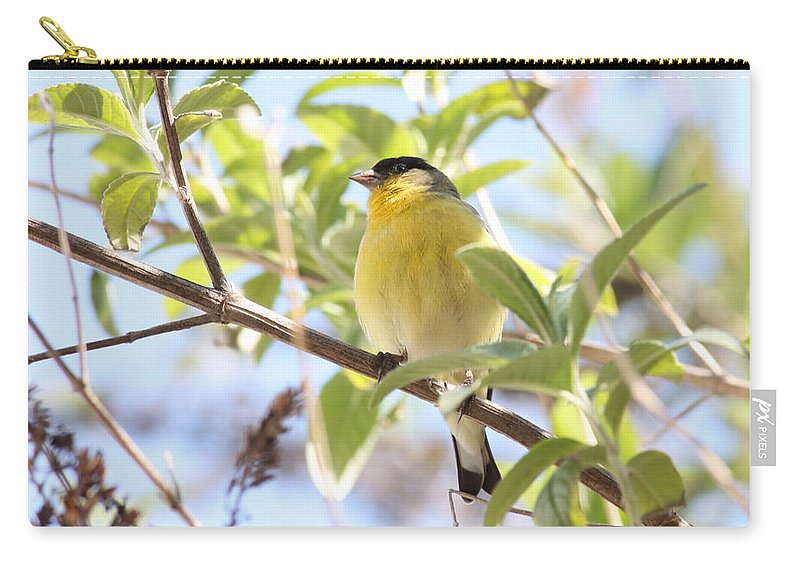 Bird Carry-all Pouch featuring the photograph Goldfinch In Spring Tree by Carol Groenen