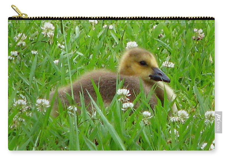 Goose Carry-all Pouch featuring the photograph Gosling 2 by J M Farris Photography