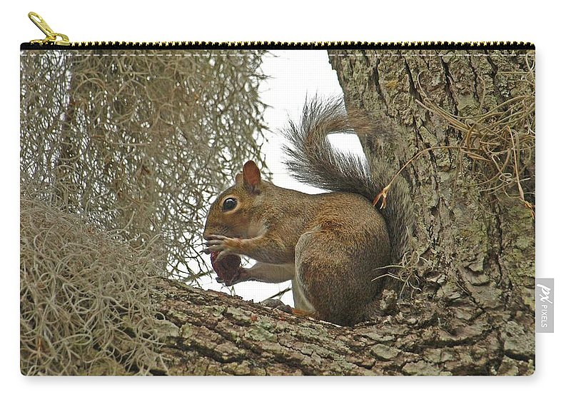 Squirrel Carry-all Pouch featuring the photograph Gotta Have It by Terrie Stickle