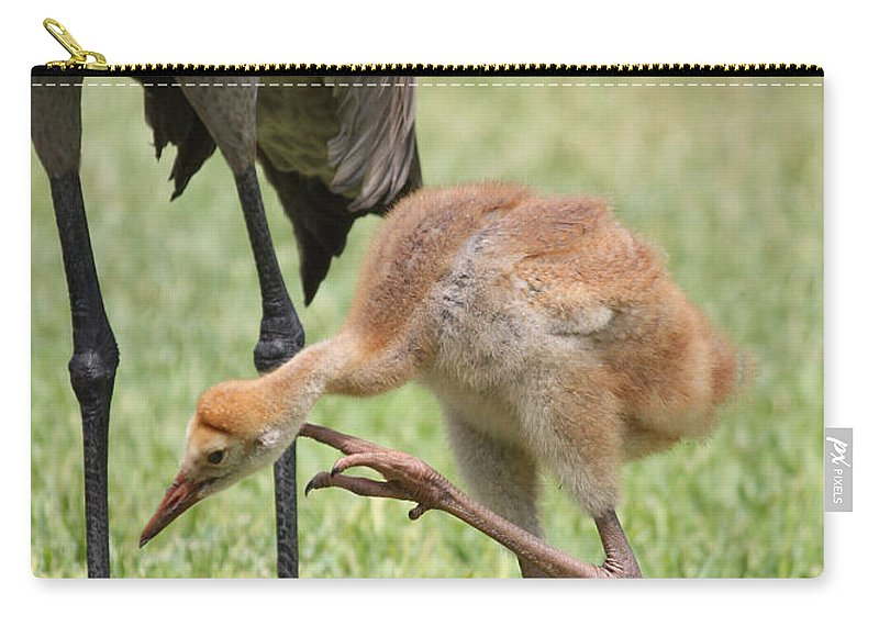 Sandhill Crane Chick Carry-all Pouch featuring the photograph Sandhill Scratch by Carol Groenen
