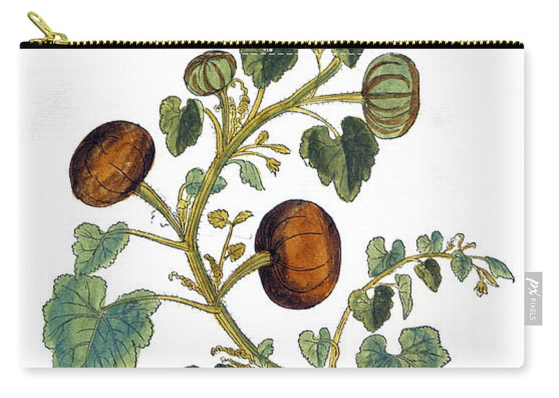 1730s Carry-all Pouch featuring the photograph Gourd, 1735 by Granger