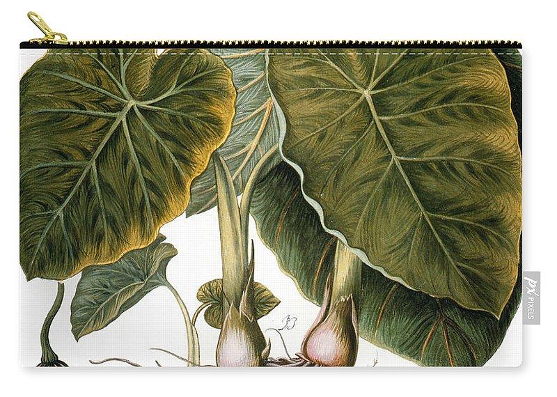 1613 Carry-all Pouch featuring the photograph Gourd, Taro, & Pumpkin by Granger