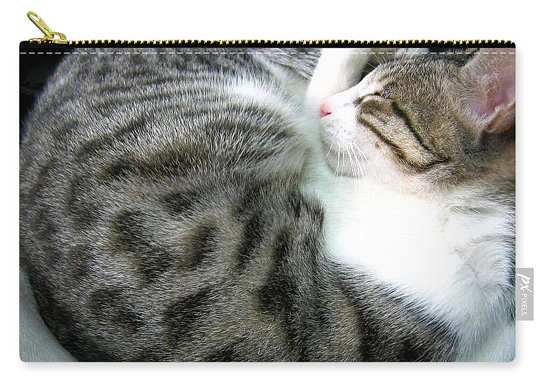My Pet Cat Gowrie Carry-all Pouch featuring the photograph Gowrie by Asha Sudhaker Shenoy