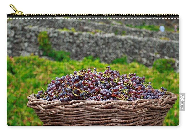 Basket Carry-all Pouch featuring the photograph Grape Harvest by Gaspar Avila