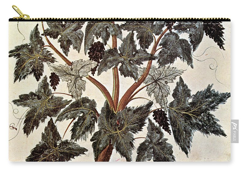 1229 Carry-all Pouch featuring the photograph Grapevine, 1229 by Granger