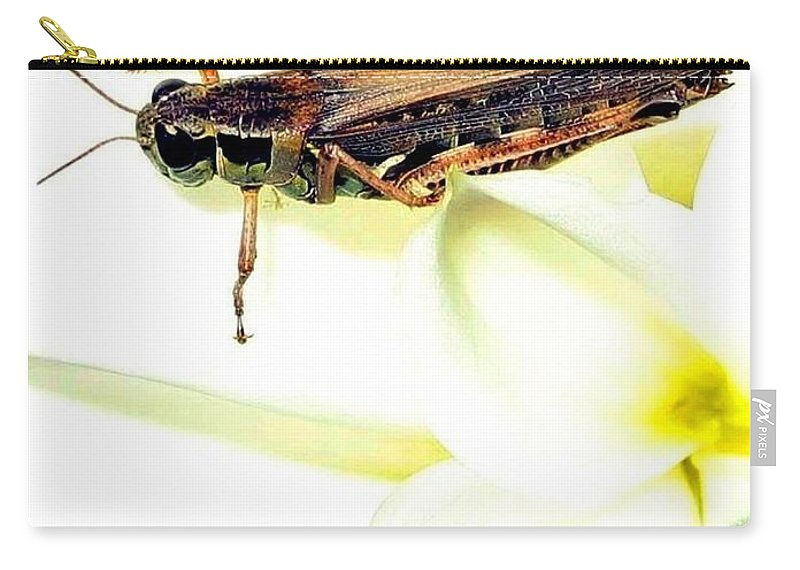 Grasshopper Carry-all Pouch featuring the photograph Grasshopper by Will Borden