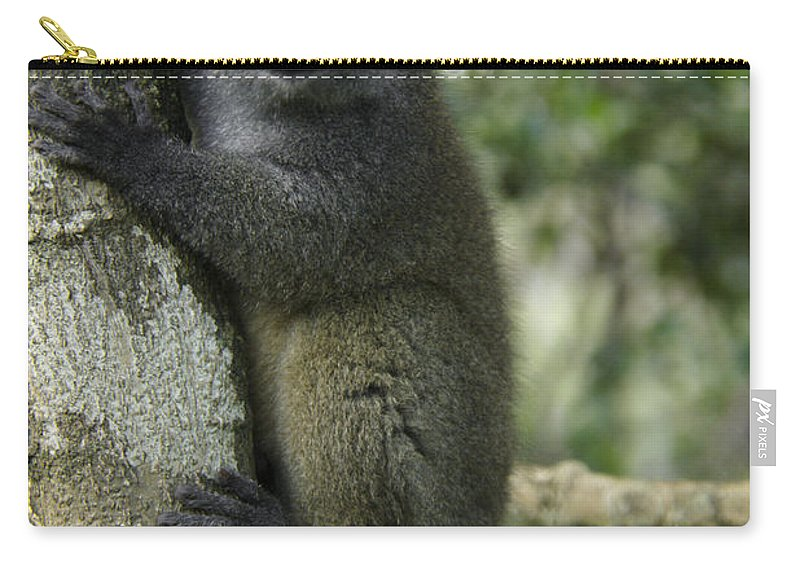 Madagascar Carry-all Pouch featuring the photograph Gray Bamboo Lemur by Michele Burgess