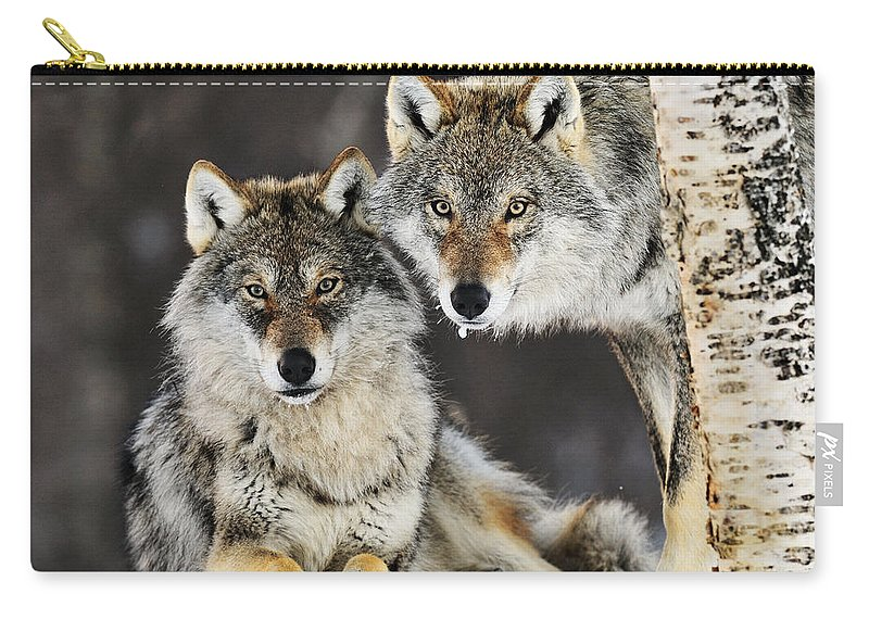 Mp Carry-all Pouch featuring the photograph Gray Wolf Canis Lupus Pair In The Snow by Jasper Doest