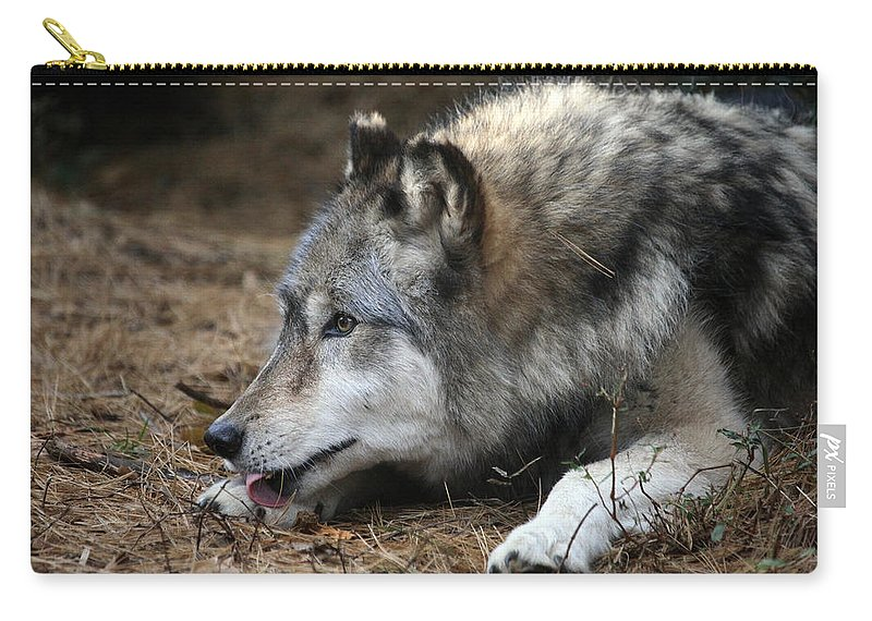 Wolf Carry-all Pouch featuring the photograph Gray Wolf by Karol Livote