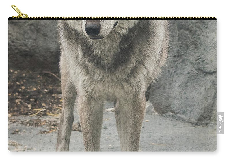Gray Wolf Carry-all Pouch featuring the photograph Gray Wolf Stare by Joan Wallner