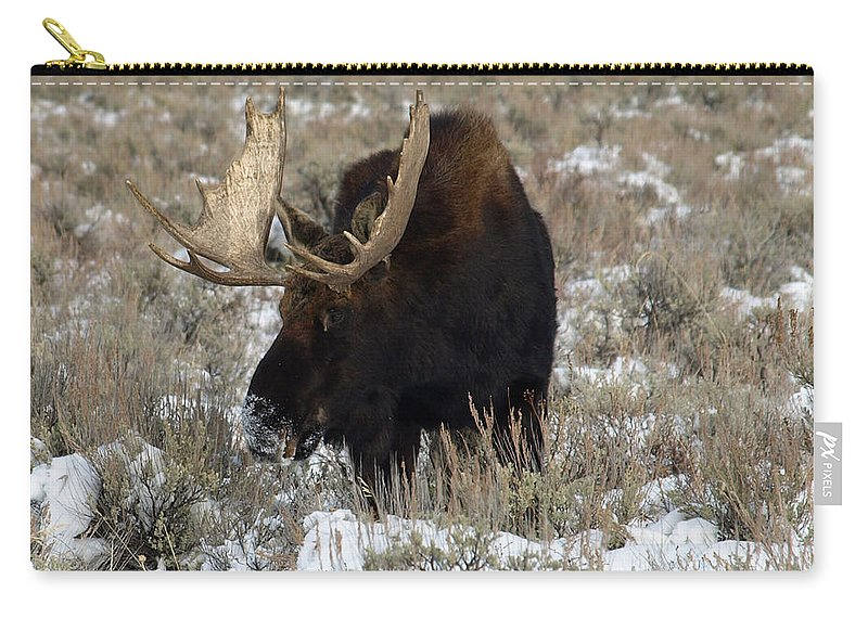 Nature Carry-all Pouch featuring the photograph Grazing Bull Moose by DeeLon Merritt