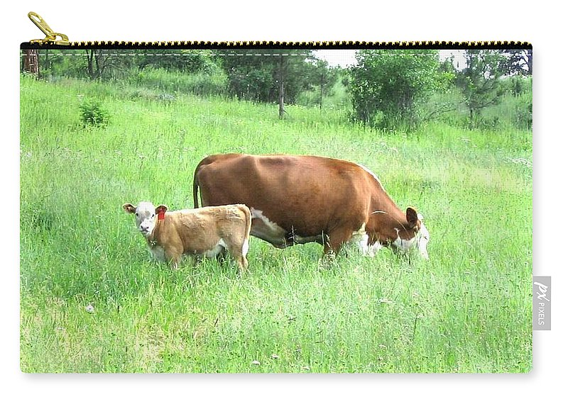 Cow Carry-all Pouch featuring the photograph Grazing Cow And Calf by Will Borden