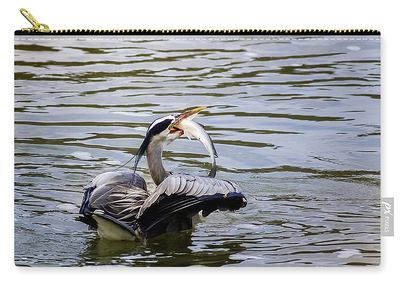 Bird Carry-all Pouch featuring the photograph Great Blue With A Drum by Robert Frederick