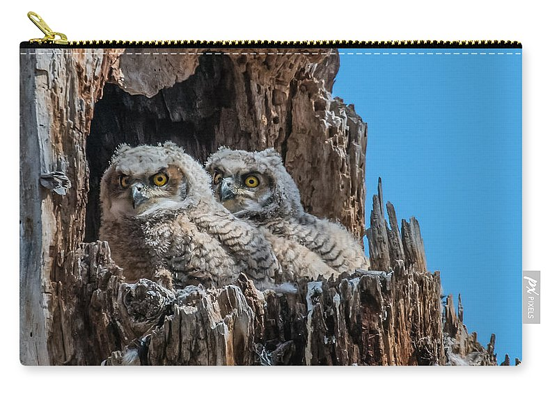 Bubo Virginianus Carry-all Pouch featuring the photograph Great Horned Owlets by Dawn Key