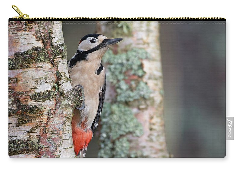 Great Carry-all Pouch featuring the photograph Great Spotted Woodpecker by Peter Walkden