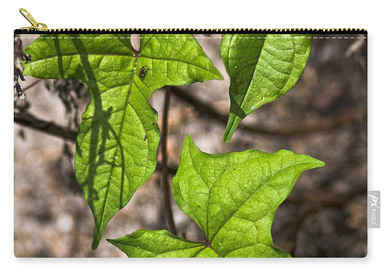 Green Carry-all Pouch featuring the photograph Green Arrowheads by Christopher Holmes