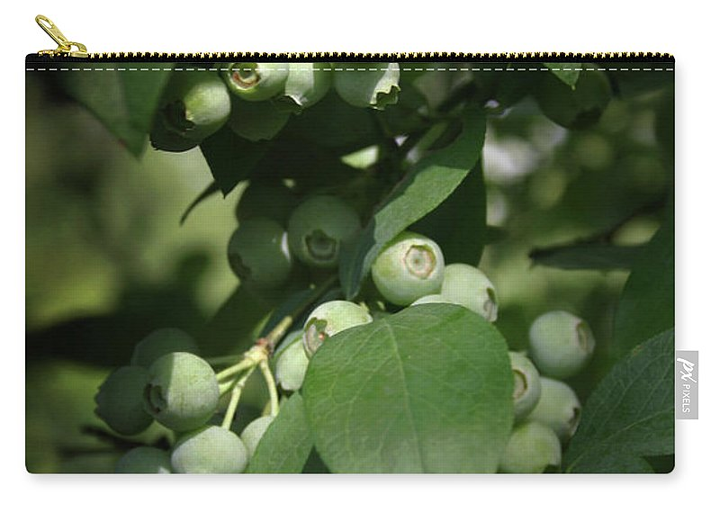 Blueberry Carry-all Pouch featuring the photograph Green Before Blue by Kim Henderson