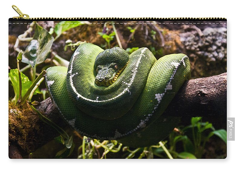 Green Carry-all Pouch featuring the photograph Green Boa by Douglas Barnett