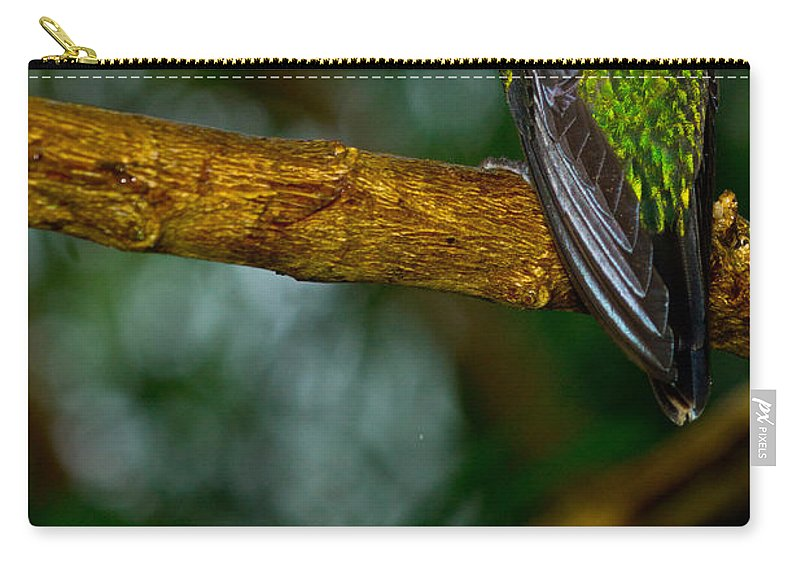 Green-crowned Brilliant Carry-all Pouch featuring the photograph Green-crowned Brilliant Hummingbird by Dant� Fenolio