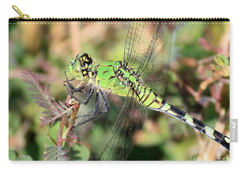 Green Dragonfly Carry-all Pouch featuring the photograph Green Dragonfly Macro by Carol Groenen