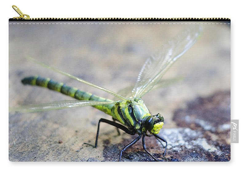 Dragonfly Carry-all Pouch featuring the photograph Green Dragonfly by Tony Beaver