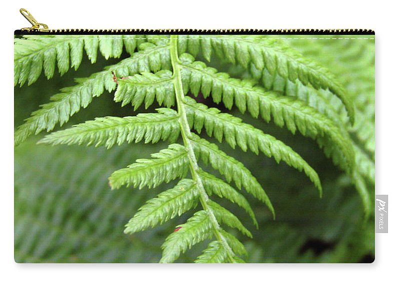 Fern Carry-all Pouch featuring the photograph Green Fern 2 by Kim Tran