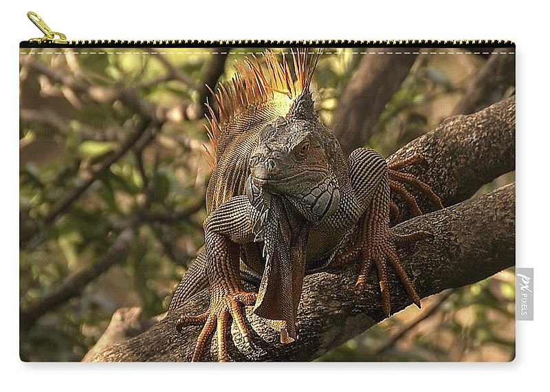 Green Iguana Carry-all Pouch featuring the photograph Green Iguana by NaturesPix