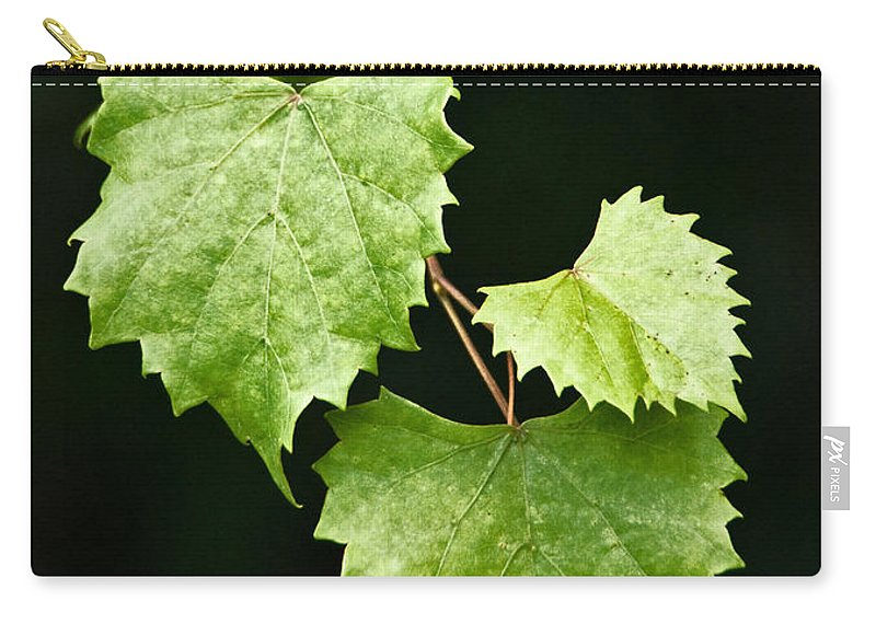 Flora Carry-all Pouch featuring the photograph Green Leaves by Christopher Holmes
