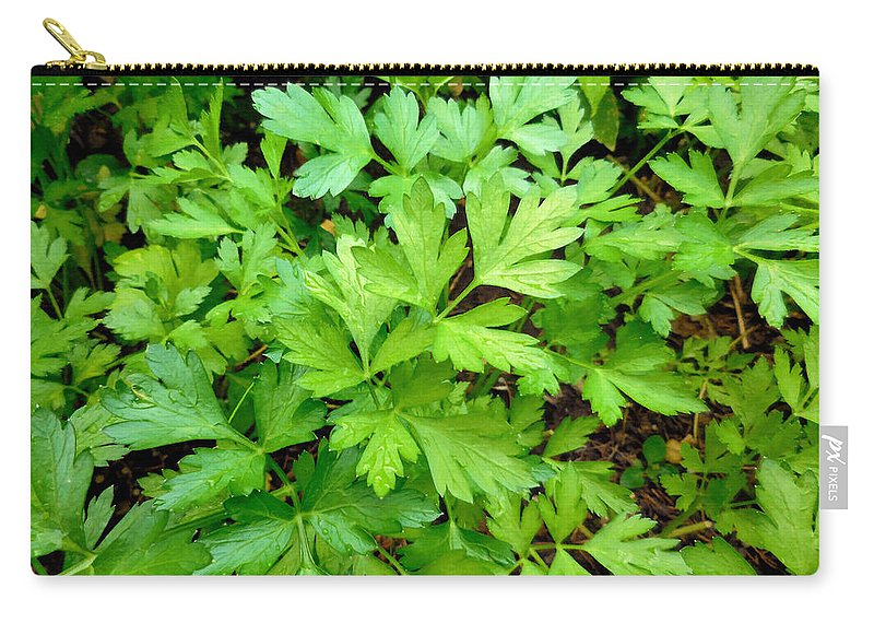Parsley Carry-all Pouch featuring the painting Green Parsley 3 by Jeelan Clark