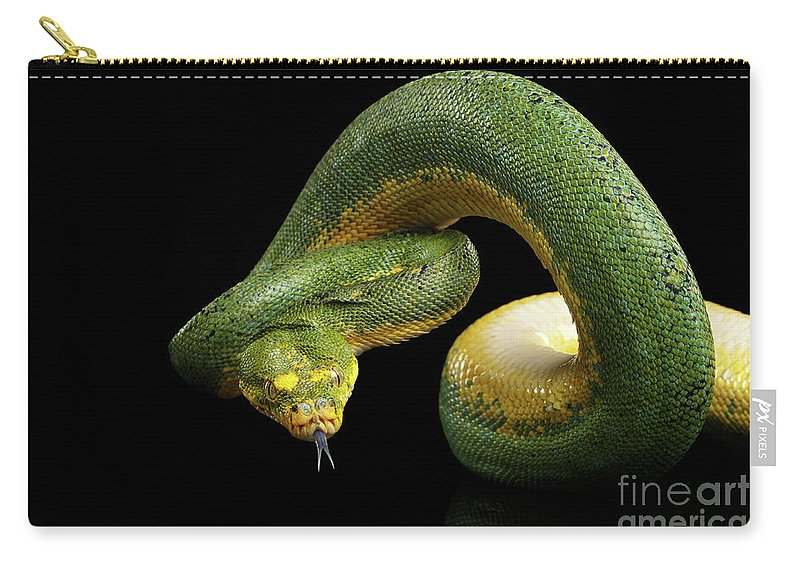 Snake Carry-all Pouch featuring the photograph Green Tree Python. Morelia Viridis. Isolated Black Background by Sergey Taran