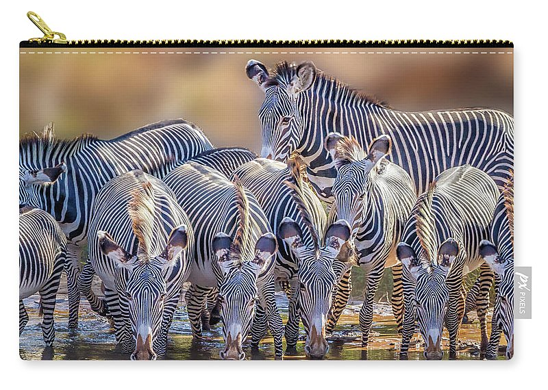 Africa Carry-all Pouch featuring the photograph Grevy Zebra Party 7528 by Karen Celella