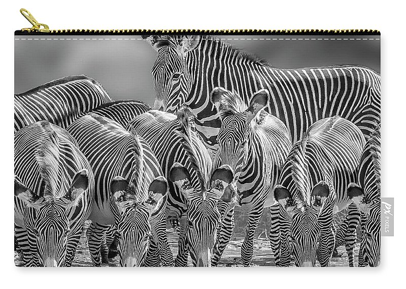 Africa Carry-all Pouch featuring the photograph Grevy Zebra Party 7528bwc by Karen Celella