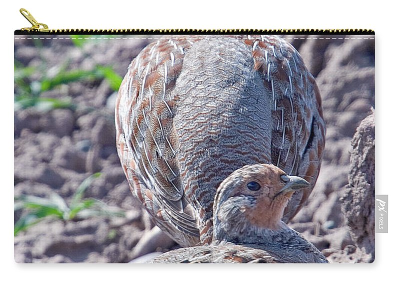Grey Partridge Carry-all Pouch featuring the photograph Grey Partridge by Bob Kemp