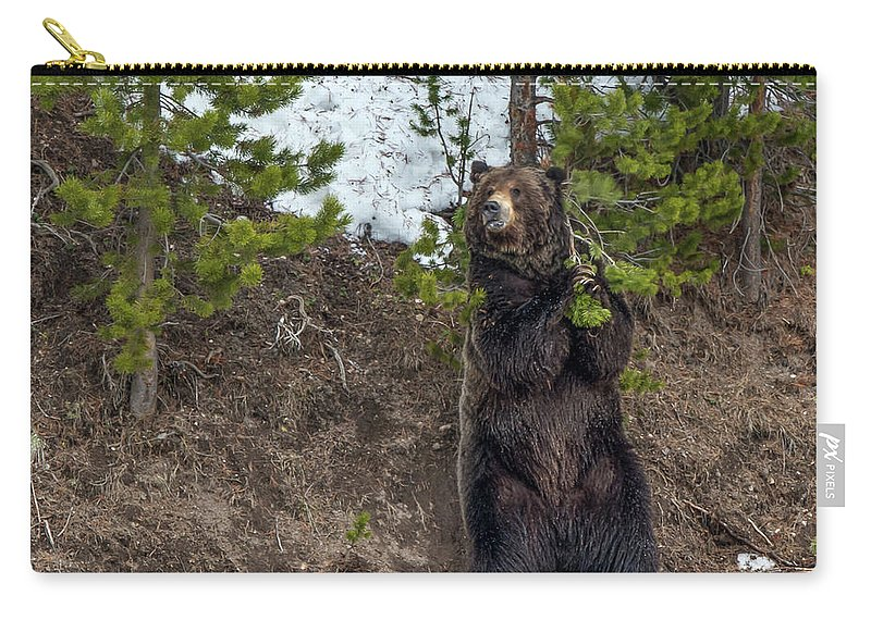 Grizzly Bear Carry-all Pouch featuring the photograph Grizzly Shaking A Tree by Yeates Photography