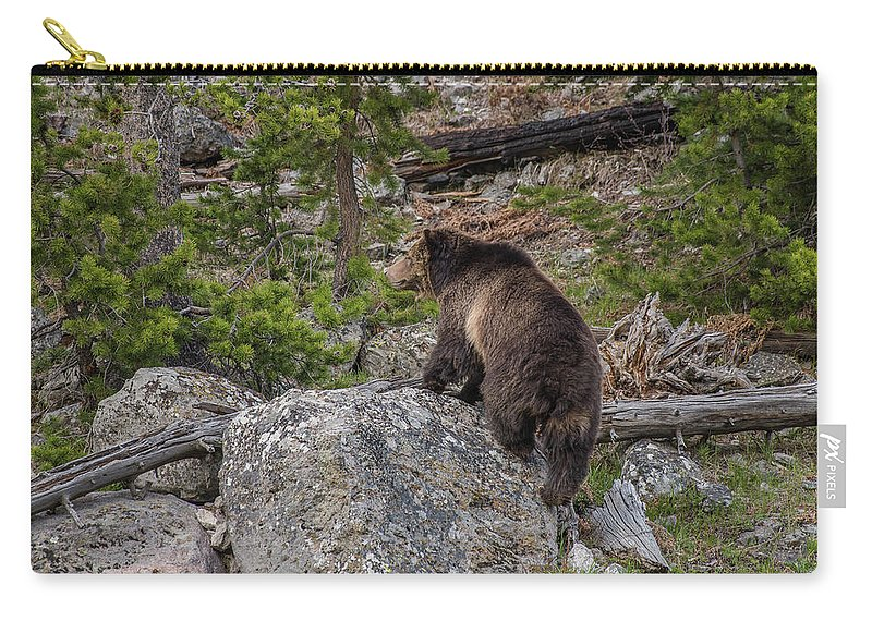 Grizzly Sow Carry-all Pouch featuring the photograph Grizzly Sow In Yellowstone Park by Yeates Photography