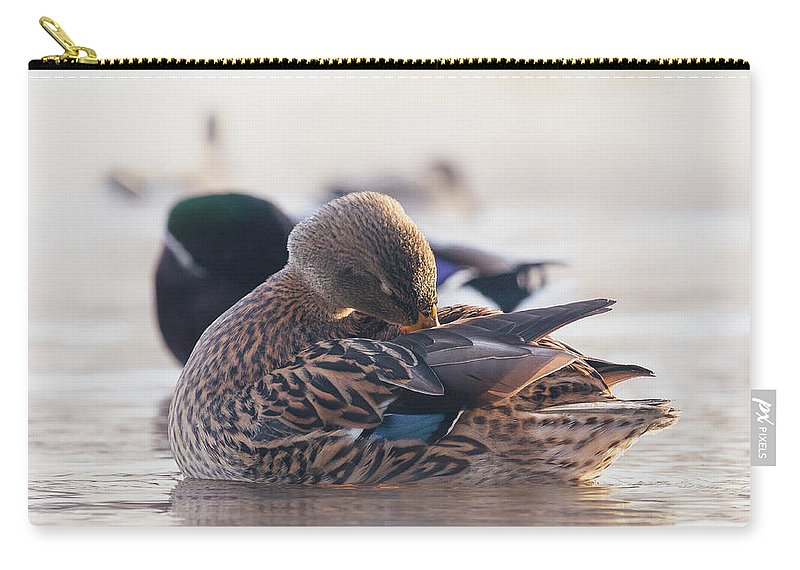 Bird Carry-all Pouch featuring the photograph Grooming by Annette Bush