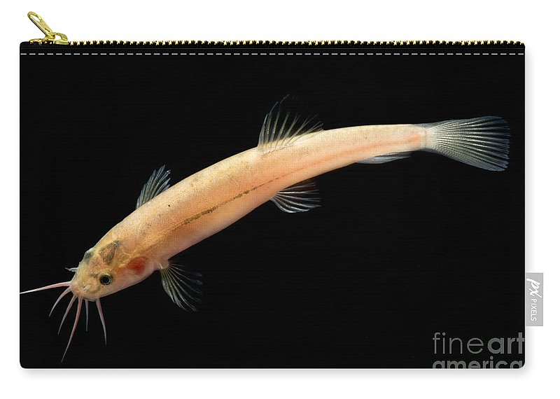 Guanan Groundwater Loach Carry-all Pouch featuring the photograph Guanan Groundwater Loach by Dant� Fenolio