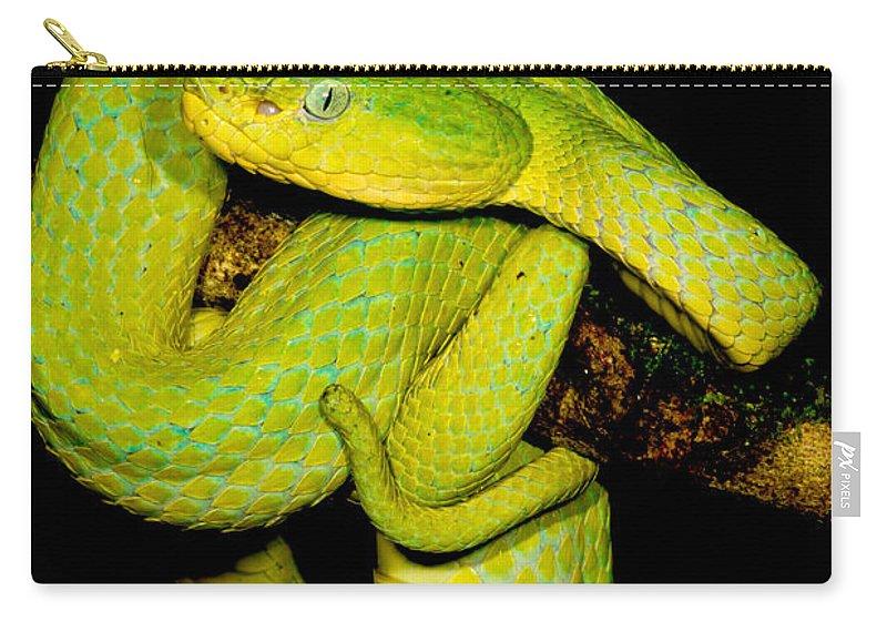 Guatemala Palm Pitviper Carry-all Pouch featuring the photograph Guatemala Palm Pitviper by Dant� Fenolio