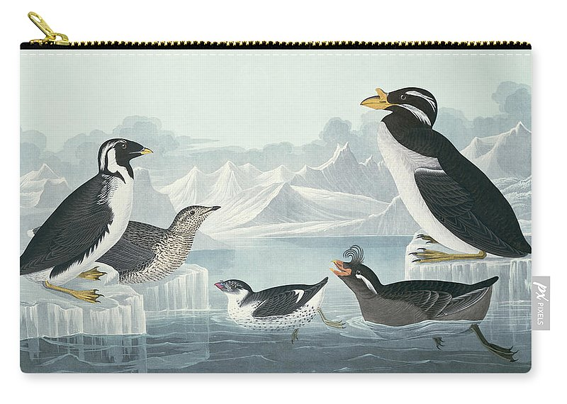 Black-throated Guillemot Carry-all Pouch featuring the painting Guillemots And Auks by John James Audubon