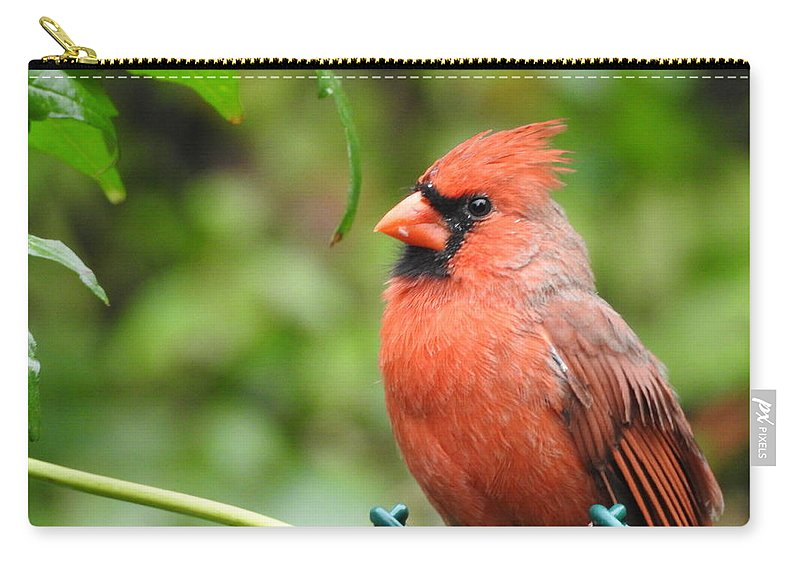 Rain.sitting In The Rain Carry-all Pouch featuring the photograph Handsome by Betty-Anne McDonald
